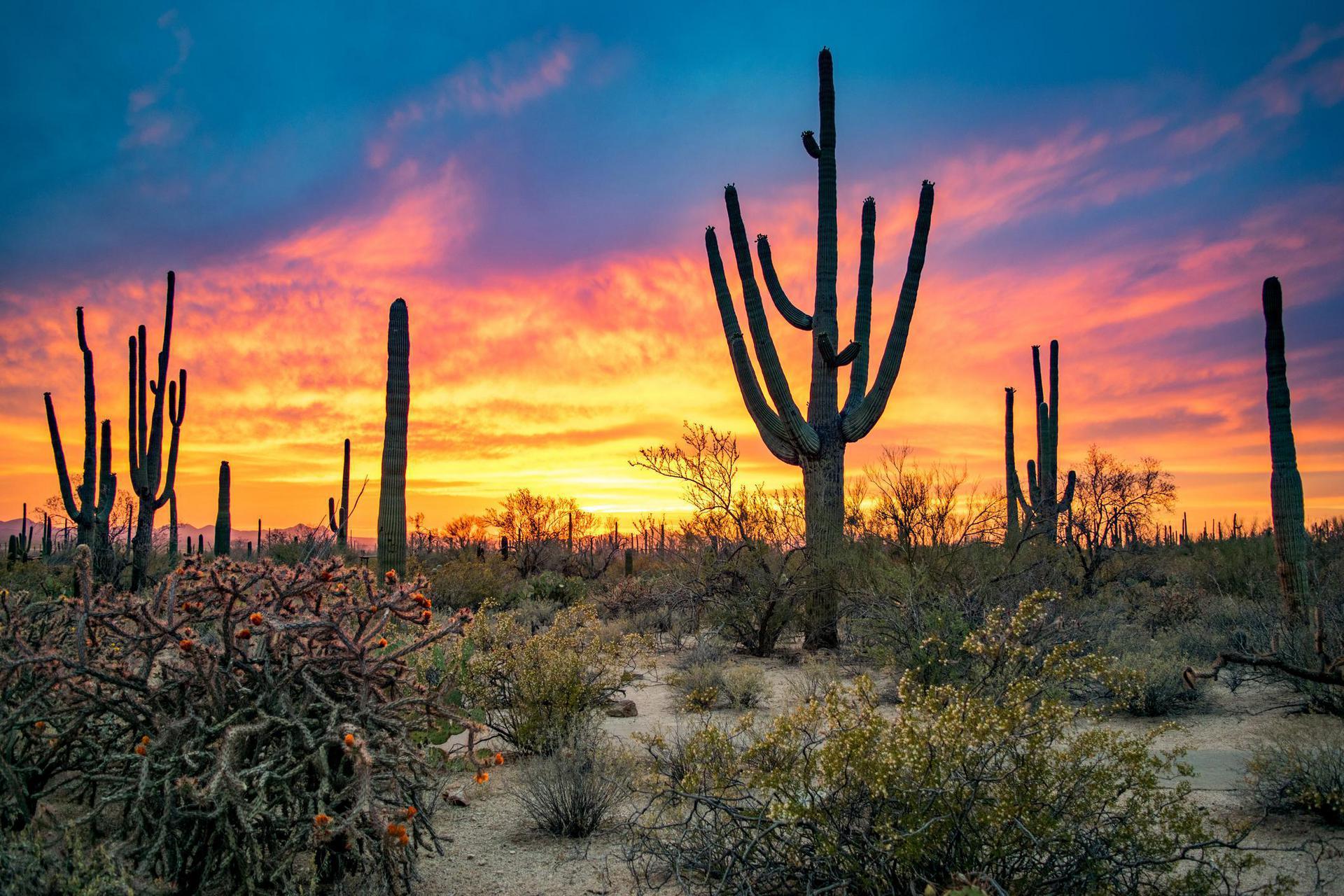 Arizona Background Checks - state-background-check-featured-image